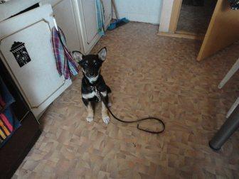 Просмотреть изображение Продажа собак, щенков Отдам в добрые руки щенка, 34863504 в Саратове