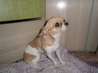 Фото в   найдена собака, хозяин, отзовись! ! в Серпухове 0