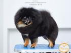 Фото в Собаки и щенки Стрижка собак Стрижка собак в Северодвинске. Уход за домашними в Северодвинске 0