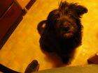 Изображение в Потерянные и Найденные Потерянные Северск. Найдена собака в старом городе на в Северске 1