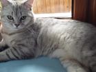 Увидеть foto  Кот для вязки 37458516 в Симферополь