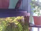 Фото в Рыбки (Аквариумистика) Купить аквариум Подаренный нам аквариум (150 л.) сегодня в Симферополь 1