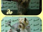 Изображение в Домашние животные Услуги для животных Стрижка и мытье домашних животных, обрезка в Смоленске 800