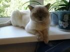 Уникальное изображение Потерянные пропал кот 37266878 в Смоленске