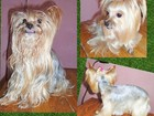 Просмотреть foto Собаки и щенки Стрижка собак и кошек в Смоленске 40035279 в Смоленске