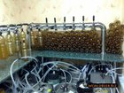 Фотография в   Оборудование для розлива пива, кваса, лимонадов в Сочи 0