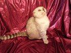 Изображение в Кошки и котята Продажа кошек и котят Элитный породистный котенок. С документами. в Сочи 0