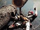 Изображение в   Спил, обрезка, удаление аварийных деревьев. в Сочи 3500