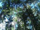 Фото в   Продам земельный участок 32 сотки с лесными в Наро-Фоминске 8000000