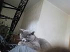 Уникальное изображение  Кот на вязку 38543671 в Симферополь