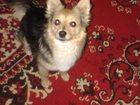 Фотография в Собаки и щенки Продажа собак, щенков Отдадим в добрые руки домашнюю, умную, ласковую, в Ставрополе 0
