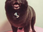 Скачать бесплатно изображение  Стрижка животных, купание любых пород, тримминг, SPA- процедуры 55665399 в Ставрополе