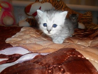 Скачать бесплатно foto Отдам даром Отдам котят в добрые руки 32733377 в Стерлитамаке