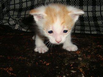 Скачать фото Отдам даром Котята от мамы-мышеловки в добрые руки в дар 32903308 в Стерлитамаке