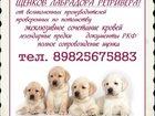 Фотография в Собаки и щенки Продажа собак, щенков Щенки рожденные 08. 10. 15г. от великолепной в Сургуте 25000