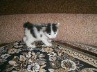 Скачать фотографию  Налетай, торопись, покупай мини-рысь! 32332051 в Тюмени
