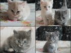 Фото в Отдам даром - Приму в дар Отдам даром Отдам чудесных котят в любящие ручки даром! в Тюмени 0