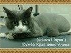 Фотография в Домашние животные Услуги для животных Стрижка кошек, экспресс линька, мягкие колпачки, в Тюмени 0