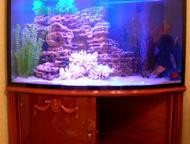 """Купить аквариум в Тюмени Продаём аквариумы и комплекты """"под ключ"""", стандартные и"""