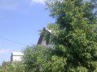 Изображение в Резюме и Вакансии Вакансии Продам пирамидальную ель . высота 6. 5 метров в Тольятти 35