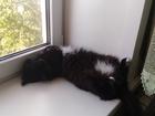 Фотография в   Отдам бесплатно кота в хорошие руки. Возраст в Тольятти 0