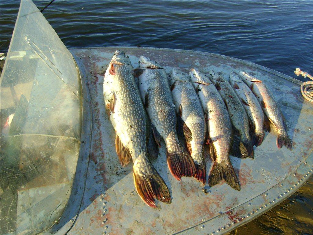 томская обл томский район с рыбалки