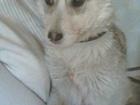 Изображение в Собаки и щенки Продажа собак, щенков Девочка Стрелочка ищет заботливых мамочку в Томске 170