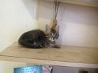 Уникальное изображение Продажа кошек и котят Котенок красивый 38299165 в Томске