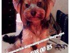Фотография в Собаки и щенки Стрижка собак Полный спектр услуг по стрижке собак и к в Туле 800