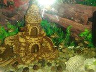 Малыши Еловой Цихлиды Лабидохромис еллоу 1, 5-2 см.     Домашнего разведения.