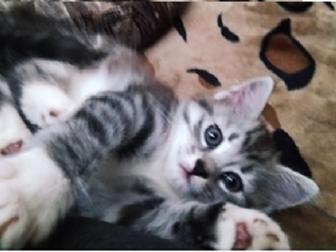 Смотреть foto Отдам даром - приму в дар отдам даром котенка-девочку, Тверь, 67369099 в Твери