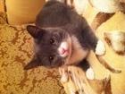 Просмотреть foto Потери Потерялся кот! 39367152 в Удомле