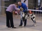 Свежее фотографию Услуги для животных Дрессировка, кинолог-профессионал 37515532 в Уфе