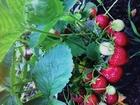 Смотреть фото Сады Плодородный сад в очень хорошем месте за Булгаково на 39км 69899734 в Уфе
