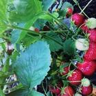 Плодородный сад в очень хорошем месте за Булгаково на 39км