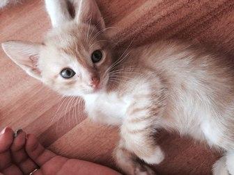 Уникальное фотографию  Отдам котят в хорошие руки 36971896 в Уфе