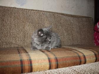 Уникальное фото Отдам даром Отдам котенка 37579350 в Уфе