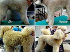 Фотография в Собаки и щенки Стрижка собак Предлагаю услуги грумера.   Обучалась в г. в Улан-Удэ 500