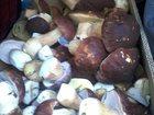 Фотография в Прочее,  разное Разное Белый гриб - Царь грибов Белый гриб считается в Улан-Удэ 0