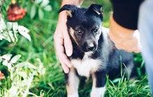 Красивый, смышленный щенок даром