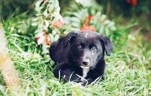 Щенку от крупной собаки нужен дом