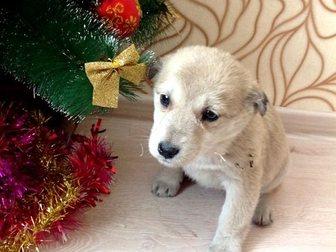 Скачать фотографию  Щенки девочки от большой собаки в добрые руки 34301298 в Улан-Удэ