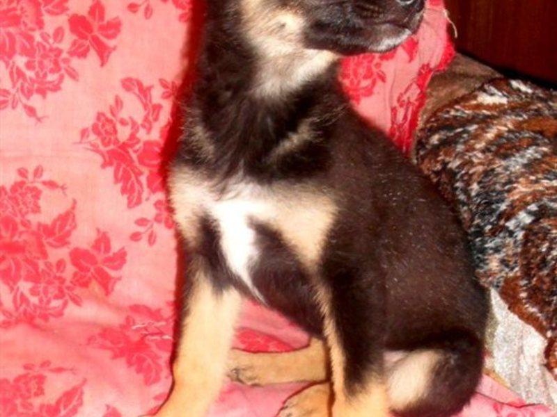 каталог собаки щенки в дар на авито в улан-удэ Норд можно успехом