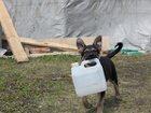 Фотография в   В начале октября наша собака Чайка родила в Ульяновске 0