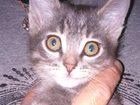 Изображение в  Отдам даром - приму в дар Очень ласковый, очень игривый котенок ждет в Ульяновске 0