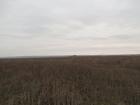Увидеть foto Земельные участки Земельный участок в черте города 44095768 в Ульяновске