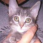 Котенок ласковый