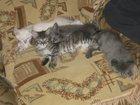 Изображение в   Отдадим котят в хорошие руки 1мес, очень в Усть-Илимске 0