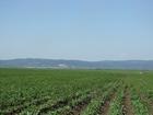 Смотреть фото  Продам земельный массив в Кемеровской области г, Новокузнецк 34526563 в Владивостоке