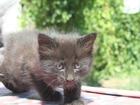 Фото в Кошки и котята Продажа кошек и котят Котёнок - кошечка, охотница и крысолов! К в Волгограде 0